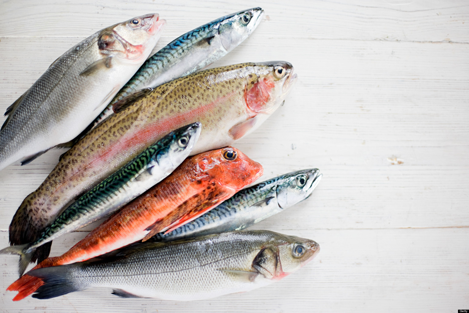 Science is the secret to sustainable seafood conserve for Is fish seafood