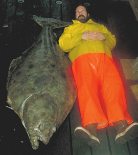 The Pacific Halibut is capable of growing up to 8 feet long and weighing up to 500 pounds, making it the largest flatfish in the world. Photo credit: NOAA.