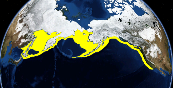 The range of the Pacific Halibut is shown in yellow. Photo credit: Wikimedia.