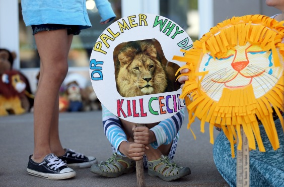 Piper Hoppe, 10, from Minnetonka, Minnesota, holds a sign at the doorway of River Bluff Dental clinic in protest against the killing of a famous lion in Zimbabwe, in Bloomington, Minnesota July 29, 2015. REUTERS/Eric Miller