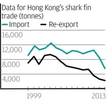 The shark fin trade in Hong Kong has declined in recent years. Source: WWF.