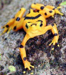 The National Zoo has been researching the fungus responsible for decimating amphibian populations. Photo credit: Dan Wilson.