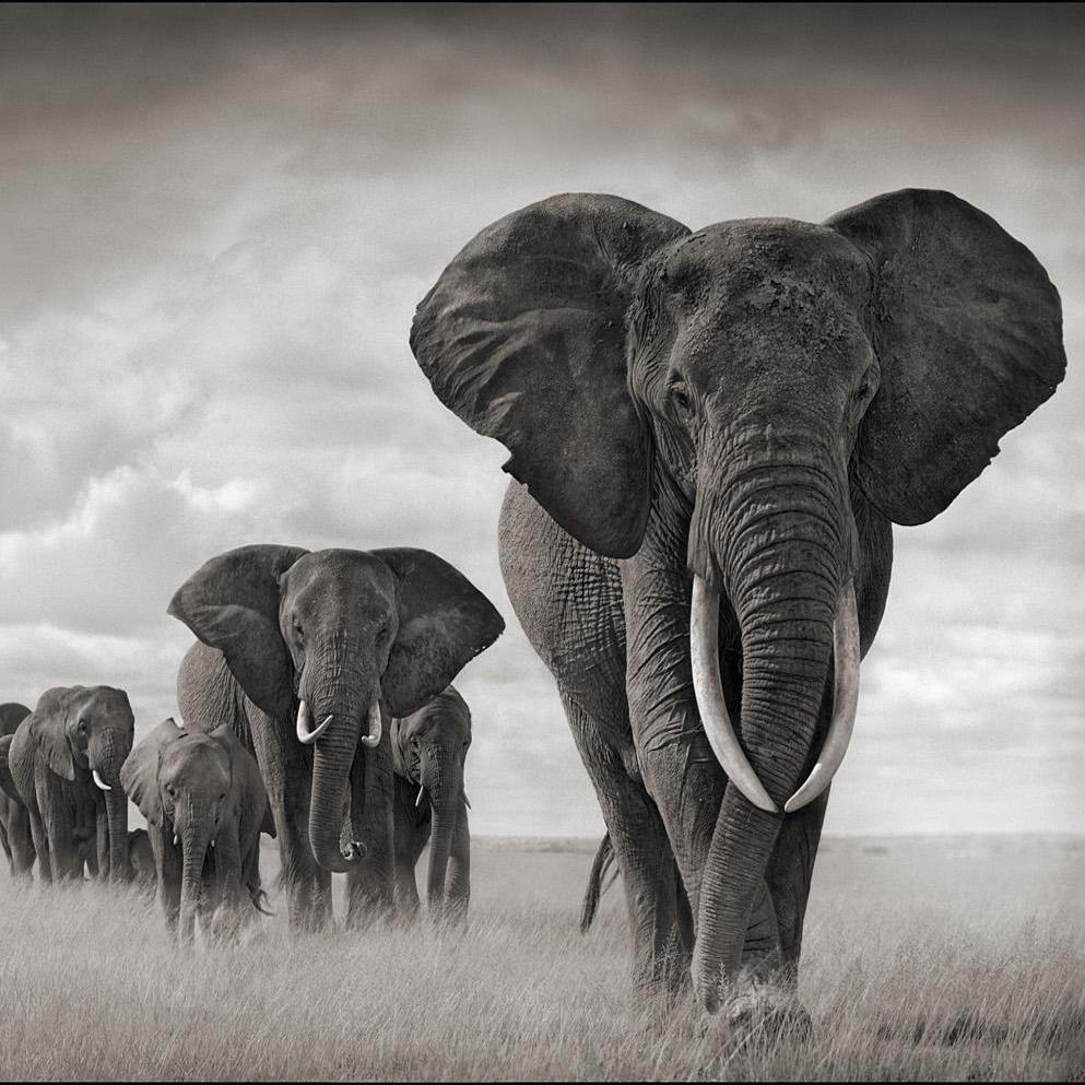 elephant-poaching-and-terrorism