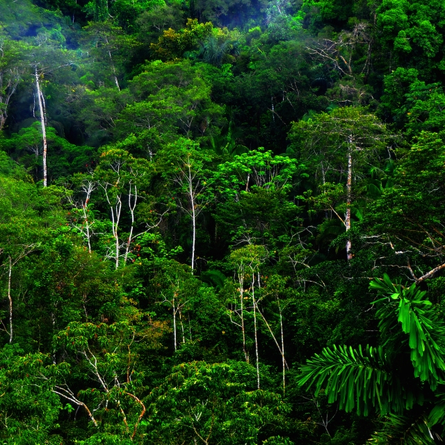 how many rainforests are there in the world