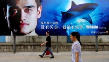 Yao Ming is the face of WildAid's campaign to stop shark finning. Photo credit: WildAid.