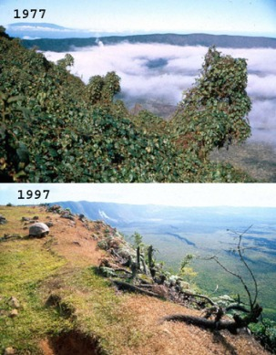 The view of Alcedo volcano on Isabella Island, before and after the invasion of goats. Photo credit: Tui de Roy.