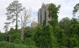 Invasive plants such as kudzu quickly overrun native plants. Photo credit: Flickr user beardnb.