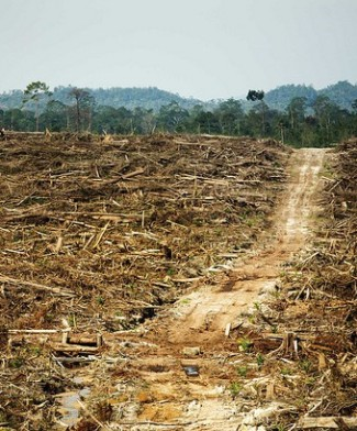 The price of palm oil. Photo credit: Rainforest Alliance.