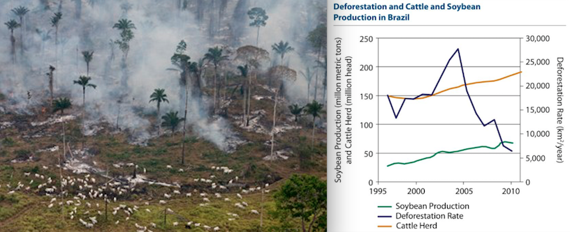 cattle ranching and its increasing affect on deforestation essay When people go into agriculture, they can choose from two major fields: ranching or crop production those who ranch often choose to work with cattle.