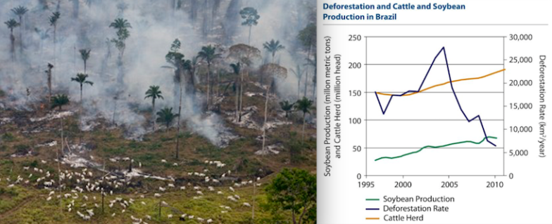 Cattle ranching in the Amazon (left) has been restricted since 2004, along with soy production. Both have increased production steadily without causing new deforestation since 2004. Photo credit: Greenpeace.