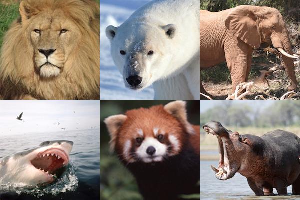 Photo credit: IUCN.