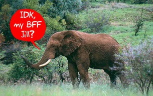 While the elephants themselves don't send text, their radio collars containing SMS chips do.  Photo credit: Gizmodo.com.