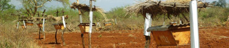 Beehives strategically placed along the length of fences keep elephants out.  Photo credit: Elephants and Bees Project.