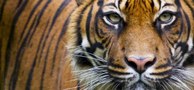 ways to protect wildlife essay