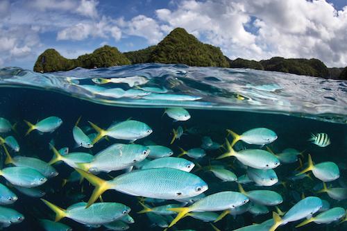 Palau 2 credit PADI