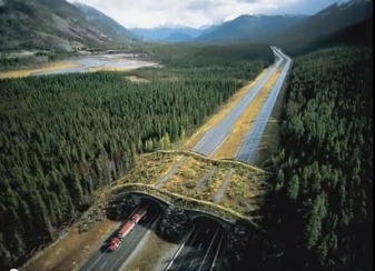This wildlife overpass in Canada helps animals cross roads safely.  Photo credit: K Gunson.