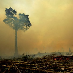 indonesia-fires-palm-oil