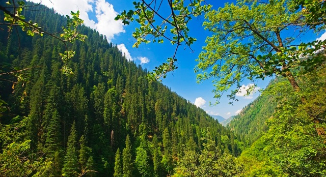 dm_temperate_montane_forest_of_great_himalayan_national_park_himachal