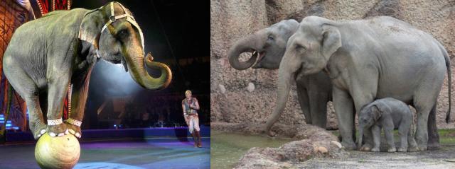 Circus vs Zoo