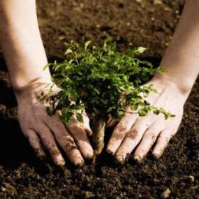 Can-Reforestation-Save-the-Planet