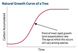 Carbon curve