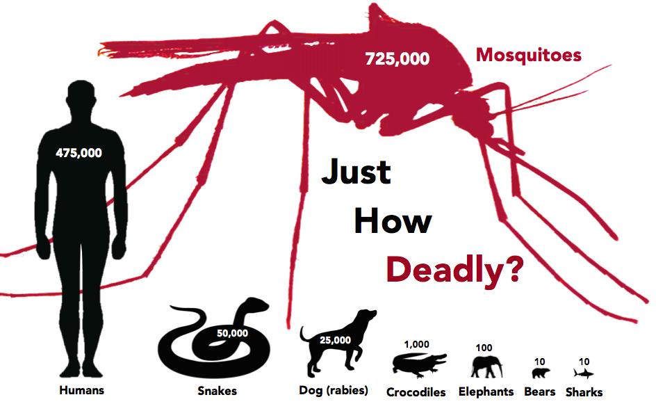 Elegant Deadliest Animals Mosquito