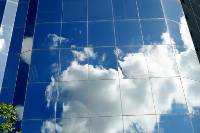 bird window reflection Steven Scott