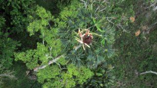 orangutan-nest-drone