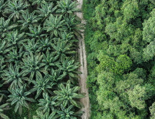 palm-oil-conservation-drones