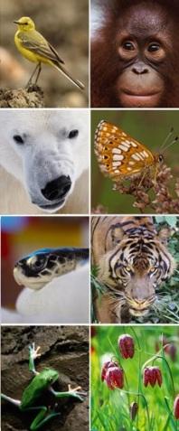 biodiversity-flagship-species