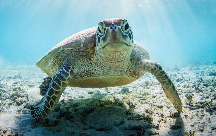 Sea-turtle-houston-zoo