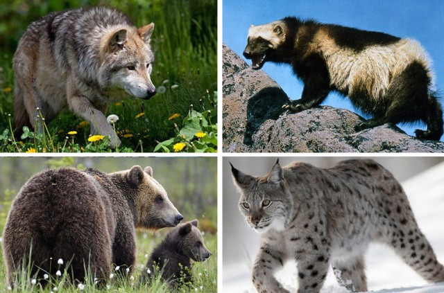 european_carnivores