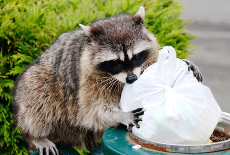 garbage-can-wildlife