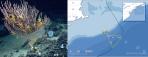 Northeast-canyons-seamounts