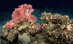 Northeast-canyons-and-seamounts
