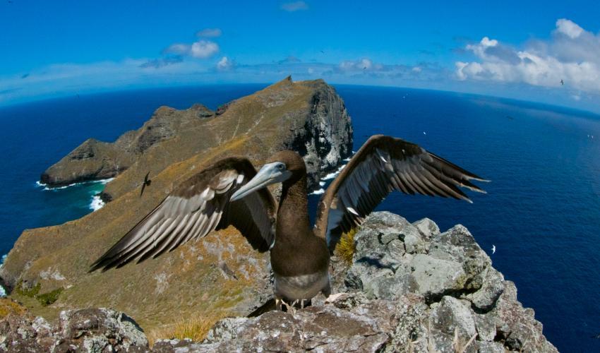 Papahānaumokuā-seabird