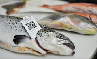 seafood-fraud-oceana