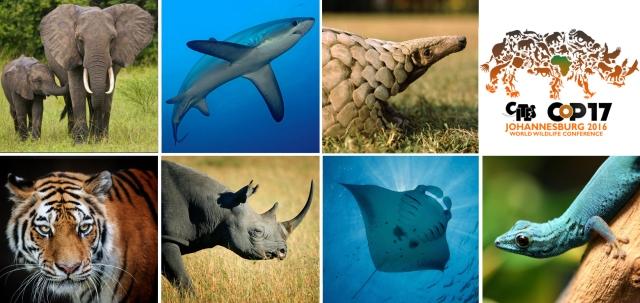 elephant-shark-pangolin-tiger-rhino-manta-gecko